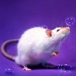 Аватар пользователя Инси Серая Мышь