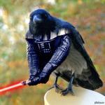 Аватар пользователя Crow