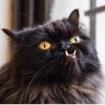 Аватар пользователя Кот